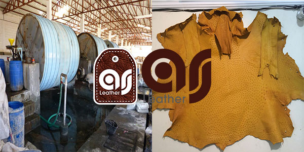 Ostrich leather export company