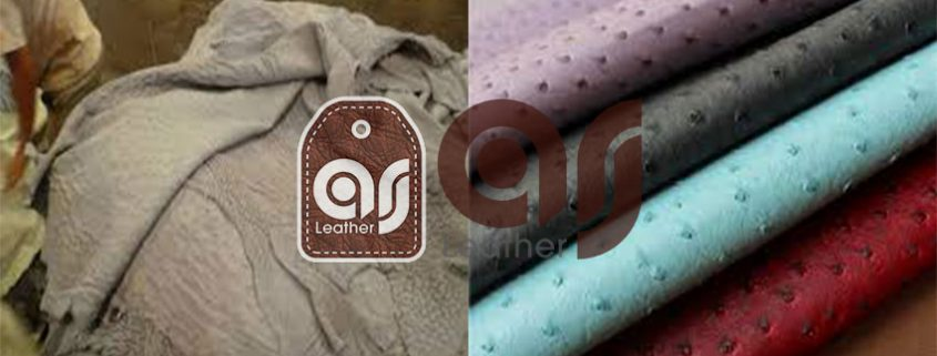 Ostrich leather exporters