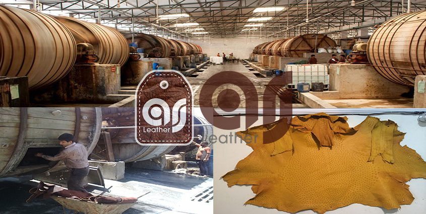 Ostrich leather production factory