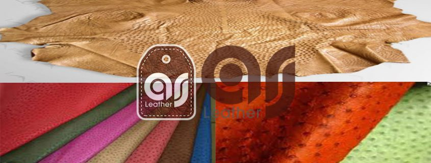 Export of high quality ostrich leather