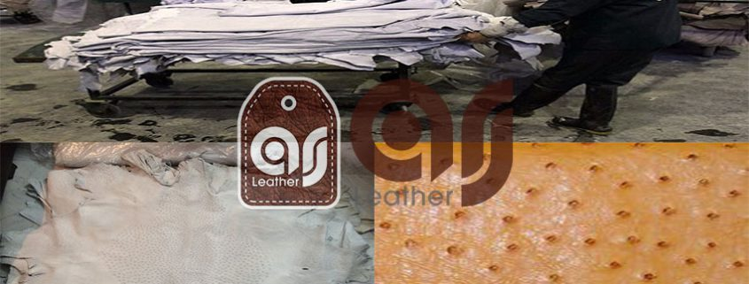 Major buyer ostrich leather