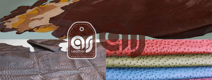 ostrich leather clothing Export